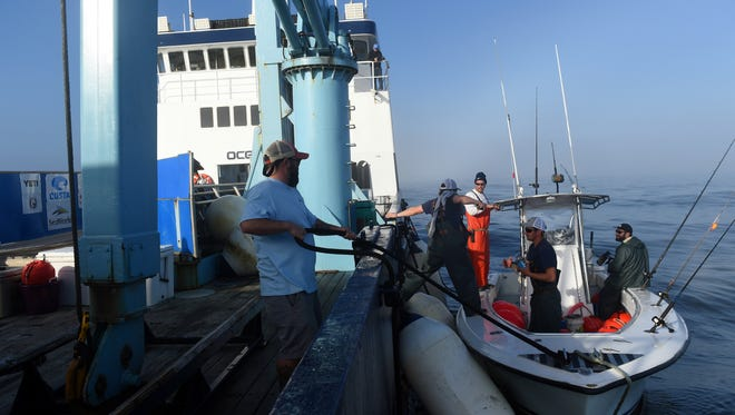 Crew members of the M/V OCEARCH prepare to set out fishing lines off the coast of north Florida in an attempt to catch great white sharks as part of a research project to tag and track the animals better understand habitat use.