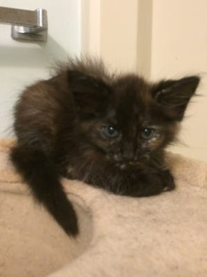 Is your home in need of some kitty love? I'm just the girl for you!