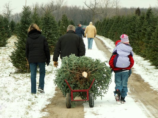 The Forest Service and BLM are now selling permits for those who want to  cut down their own Christmas tree. (Photo: Deseret News) - Permits On Sale To Cut Down Your Own Christmas Tree
