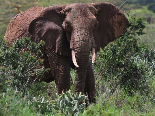 an analysis of african wildlife in africa List of african animals extinct in the holocene  the list of extinct animals in africa features the animals that have become extinct on the african continent and .