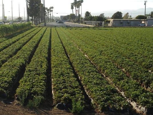 636456783902043972-0617-VCLO-pesticides.JPG