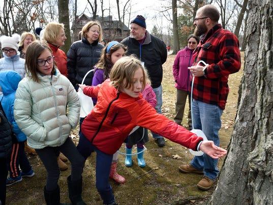 Hermitage taps trees