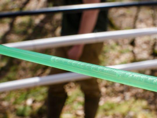 Birch sap flows through tubing at the Heffernan Family