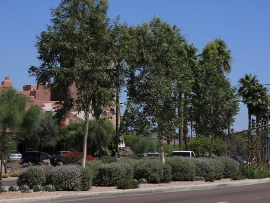Landscaped median at Scottsdale and McDowell roads.