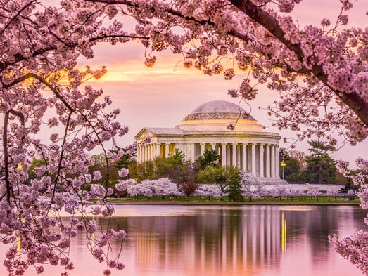 The cherry blossoms will peak early this year on March 17