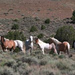 The battle between Iron and Beaver County commissioners and the federal government over the wild horse issue began last April when the six men wrote a letter to the Bureau of Land Management, threatening to deal with the overpopulated horse herds on the Western Range if the federal government started rounding up Bunkerville rancher Cliven Bundy's cattle.