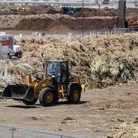 Here's what happens to palm fronds after monsoon storms hit Phoenix