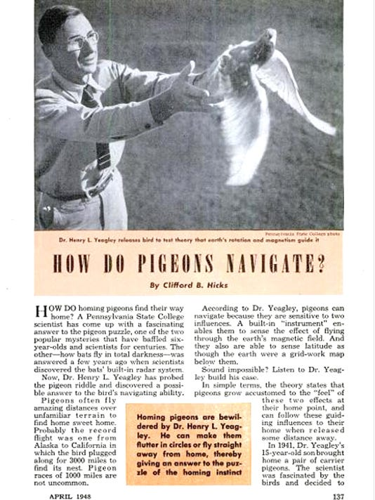 "submitted""How do Pigeons Navigate?"" by Clifford B. HicksFor Jim's blog"