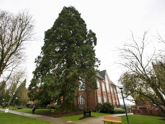 Campbell Hall and the large sequoia tree in Monmouth,