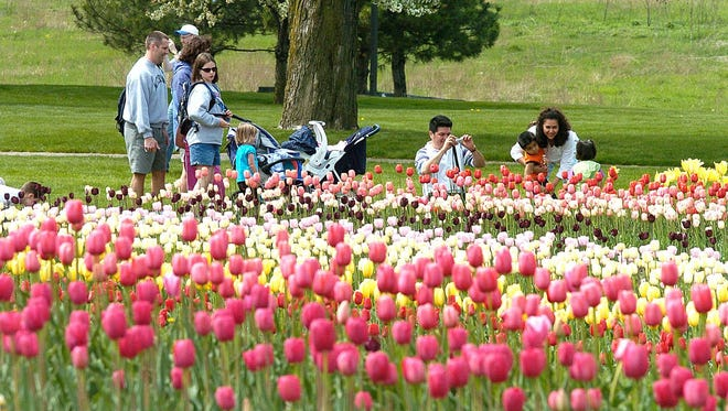 Holland's tulip festival includes entertainment, costumes, parades and other activities.