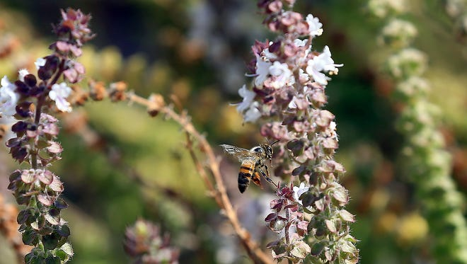 """Nueces Master Gardeners will host Justin Jones who will present """"Honey Bees 101"""" at noon Tuesday, June 20, at the Garden Senior Center, 5325 Greely Drive. Cost: Free. Information: 361-701-6207."""