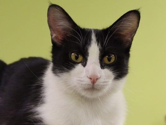636253494552536064-Penelope-the-cat.jpg