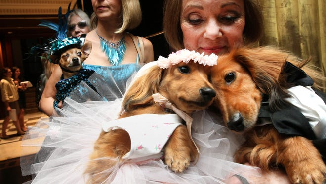 Dachshunds dressed for the occasion, Dee Dee, foreground left, and her cousin Clifford, foreground right, are held by their owner Valerie Diker, as they and other dogs and people wait for the start of the most expensive wedding for pets in New York on July 12, 2012.