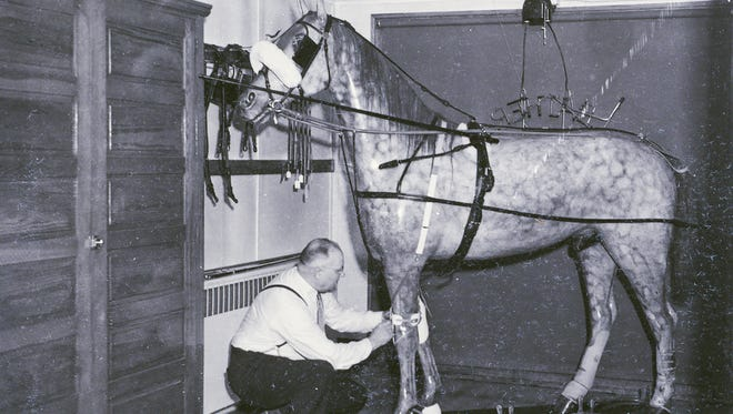 A man tends to the horse in the window at the William Zastoupil Harness Shop on South Eighth Street in Sheboygan during the 1950s.