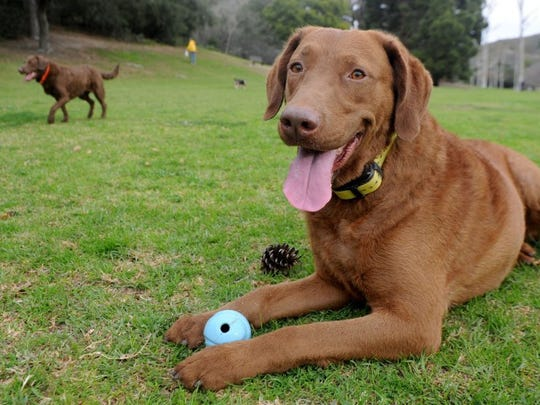 At Arroyo Verde Park in Ventura, dogs are allowed off leash from 6-9 a.m. daily.
