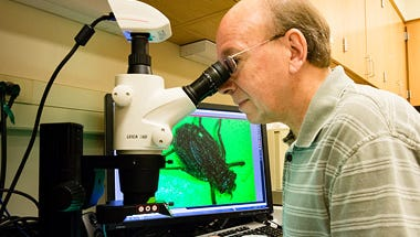 USD biology professor Hugh Britten views a Hine's emerald dragonfly larvae under the microscope.
