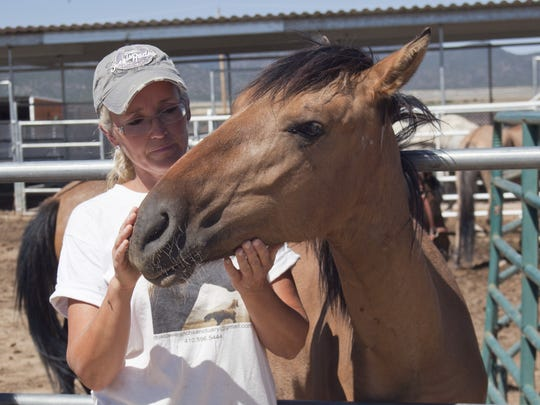 Several horses enjoy an afternoon on the Dust Devil Ranch Sanctuary for Horses with owner and founder Ginger Grimes in this August 2014 file photo.