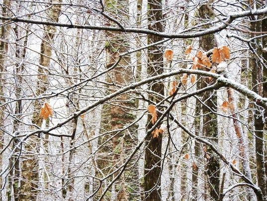 636166400657868247-snowy-network-of-twigs-1024x768-.jpg