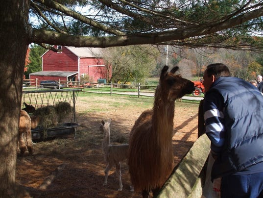 -friendly-alpaca.jpg