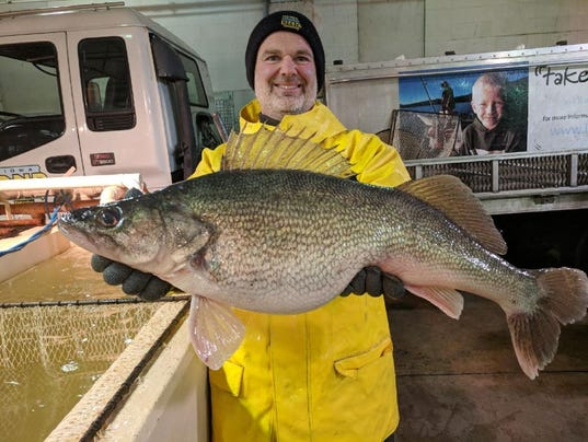 Large walleye caught by Iowa DNR in Lake Rathbun
