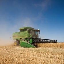 Wheat harvested in Queen Creek, Arizona.