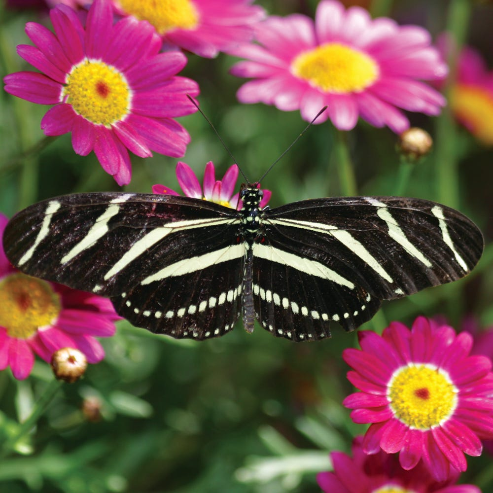 Attirant The Spring Butterfly Exhibit Will Features Hundreds
