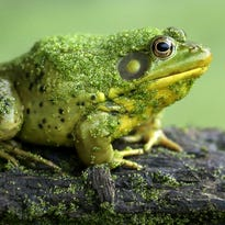 Your Stories: Frog pond, original poem and spectacular images show how cool nature can be