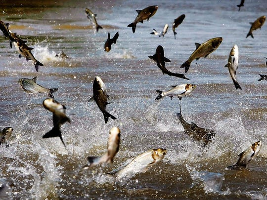 To reduce the risk of Asian carp reaching the lakes, the U.S. Army Corps of Engineers has recommended installing anelectric barrier at the Brandon Road lockto repel or stun the fish.
