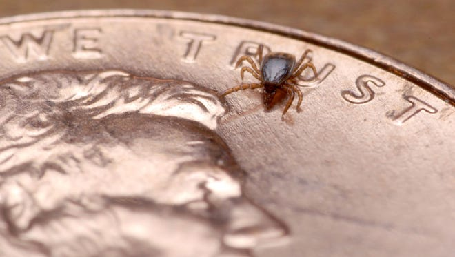 Not all ticks are easily seen. This one is just a little larger than the letters on a penny.