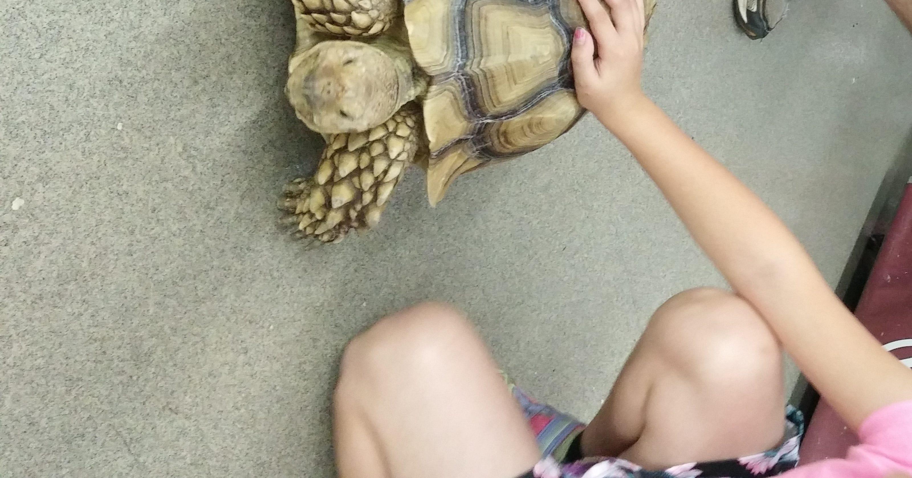 Petland Pensacola advocates responsible pet ownership