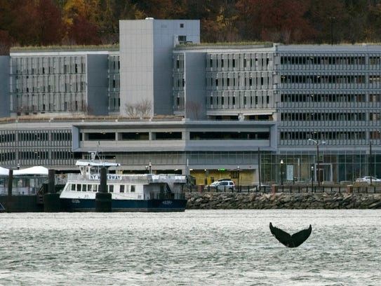 Gotham shakes a tail Nov. 20 near the NY Waterway Ferry