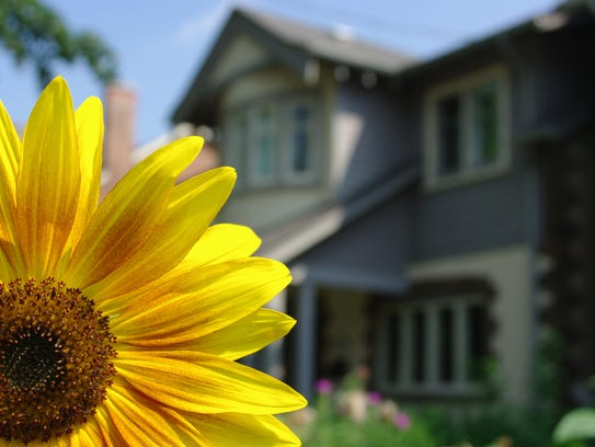 A bright yellow flower with a home in the background