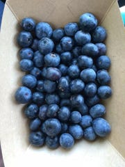 Blueberries freshly picked at Blue Sky Farm in Jefferson County.