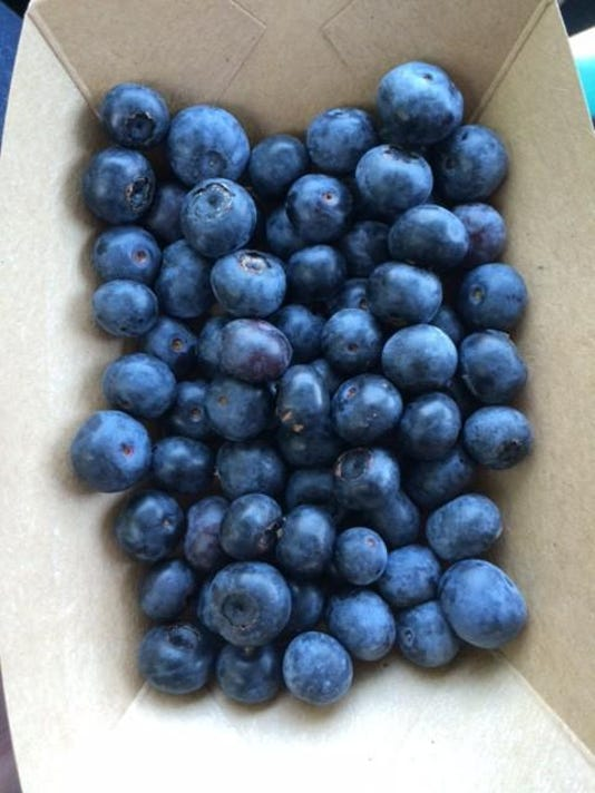 Blue-Sky-Farm-blueberries-MCJ-e1433252312867