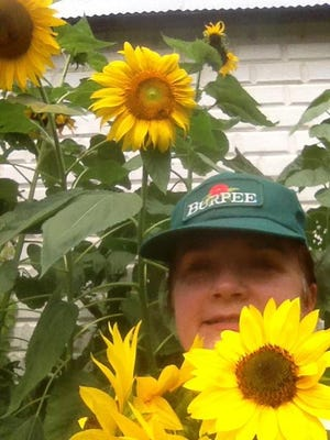 Patti Sheppard of Millville is pictured with her sunflowers.