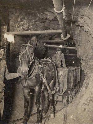 Mule Train on 1100 foot level, Rarus Mine, Butte.