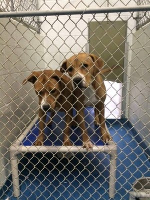 Benji and Cocoa receive their new homemade Kuranda bed while in their kennel at the Escambia County Animal Shelter.