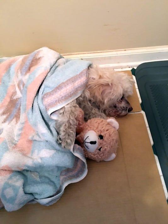 635882810514854517-rescued-dog.jpg