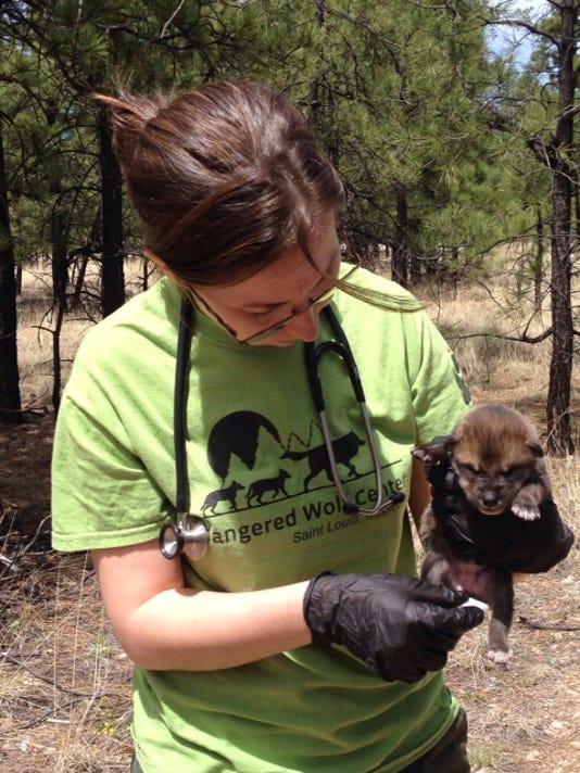 Captive Wolf Pups.jpg