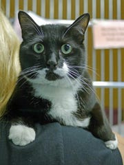 Handsome black-and-white boy Jack is waiting for his forever family at the Mt. Pleasant Animal Shelter.