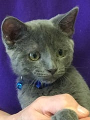 Binx is a playful kitten looking for a home.