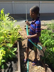 Jeylani Ali, 10, tends to the garden at Stayton Middle