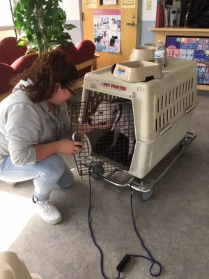 Pet-friendly shelter in Indian River County