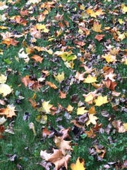 Fall leaves outside the wee house.
