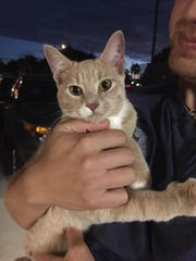 Do you know me? I was found in Willoughby Acres, north of Immokalee Road.