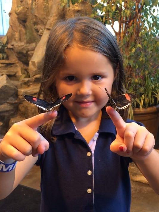 Butterflies at MPM