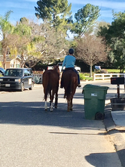 Residents of Waverly Heights, an equestrian neighborhood in Thousand Oaks, say above-average amounts of vehicular traffic there pose a danger not only to people, but also to horses.
