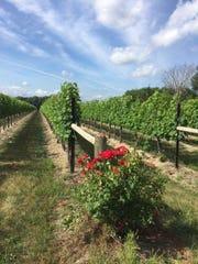 Coia Vineyards in Vineland.