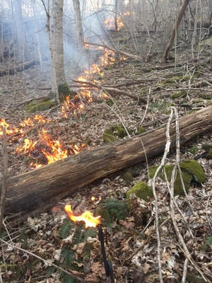A forest fire, first reported April 10, 2017 in Shawnee State Forest, burns leaf litter and deadfall.