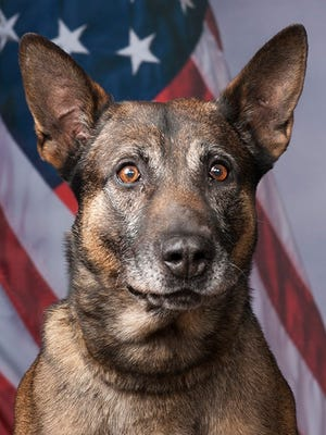 Five-year-old Tommy, a Pima County Sheriff's Department K-9, is now fully recovered from a cancerous face tumor.